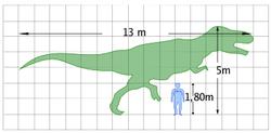 Quantificazione dell'evoluzione dall'uomo al Tyrannosaurus Rex o viceversa